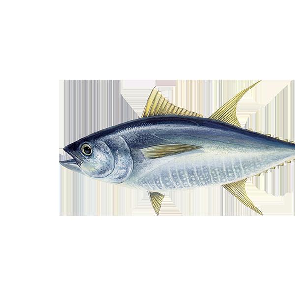 Ton cu înotătoare galbene